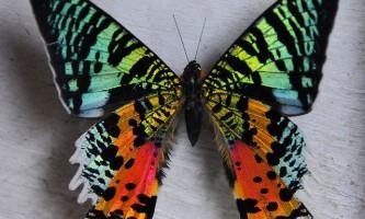 Мадагаскарська метелик астрономія