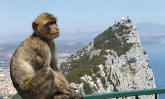 Маготи - єдині мавпи, вільно живуть в європі