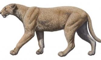 Махайрода - саблезубая кішка