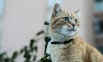 Максидин для кішок: інструкція із застосування