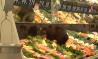 Маленький ведмедик заліз в рибний відділ супермаркету