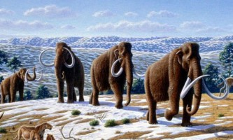 Мамонт - прабатько слона. (Mammuthus)
