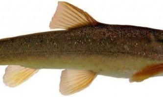 Маринка - риба з жіночим ім`ям