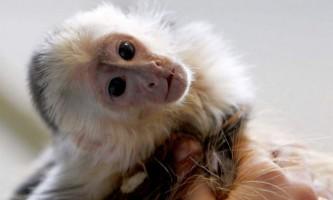 Мавпа «відкрила» господареві свій тайник