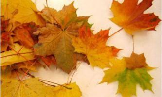 Майстер-клас: букет троянд з осіннього листя