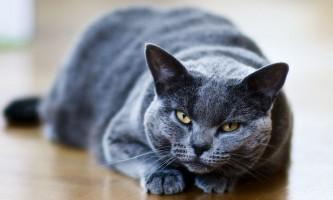 Мазь ям бк для кішок від позбавляючи