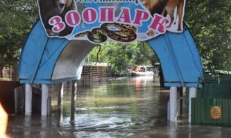 Мнс продовжує евакуацію тварин з уссурійського зоопарку