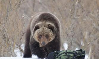 Ведмідь і рюкзак