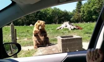 Ведмідь, який навчився ловити їжу однією лапою, став зіркою youtube