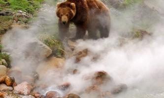 Ведмеді долини гейзерів