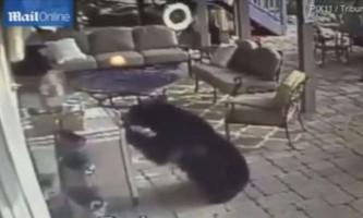 Ведмеді забралися до американця додому і з`їли там всю їжу