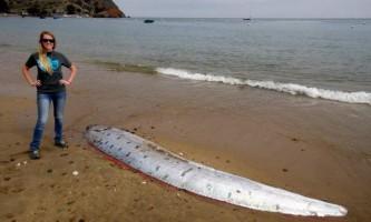 Мертві ремнетели викинуті на південний берег каліфорнійського затоки