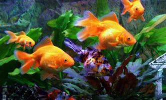 Метеозалежні чи риби?