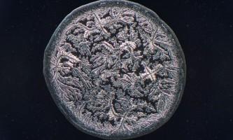 Мікрофотографії сліз від моріса міккерса
