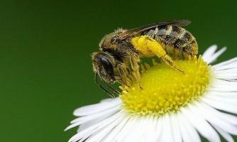 Світ без бджіл: як виглядали б полиці магазинів