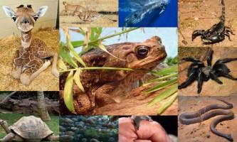 Світ тварин в цифрах: від 0 до 10