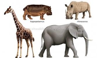 Ссавці тварини