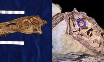 Багато динозаври вели нічний спосіб життя
