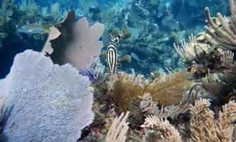 Сеча риб виявилася цінним продуктом для коралових рифів