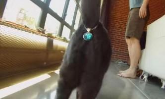 Модний аксесуар коту під хвіст