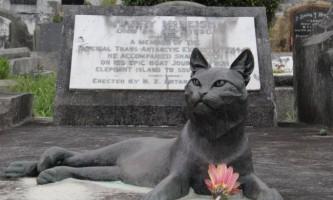 Могила місіс чіппі - першої антарктичної кішки