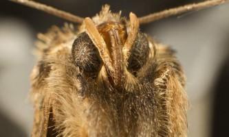 Моль - невеликий метелик, що вселяє страх