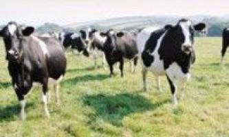 Молочне скотарство вимагає відродження