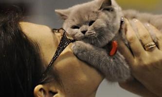 Молоді українці замість дітей воліють заводити собак і кішок