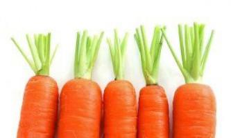 Морква на півночі: кращі сорти і їх опису