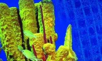 Морська губка (euplectella) джерело нових технологій