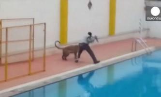 В індії леопард забрався в школу