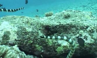 Морські змії - непомітні вбивці