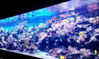 Морський океанаріум в москві