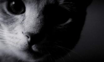 Москвичка викинула з чотирнадцятого поверху своїх кішок