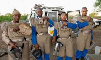 Мозамбикским фахівцям з розмінування допомагають щури-сапери