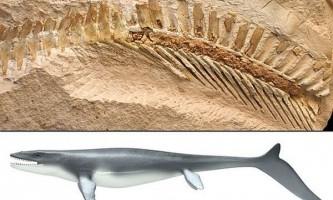 Мозазаври володіли потужними хвостами, як у сучасних білих акул