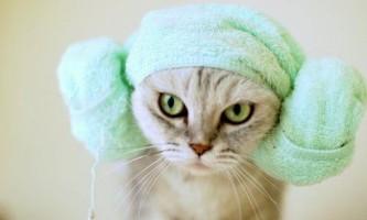 Чи можна мити кішок і як це робити правильно