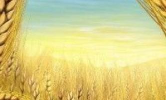 Мсз звіт від 26 червня, україна, пшениця і зернові культури