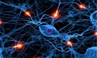 Миші допомогли знайти вимикач страхів в головному мозку