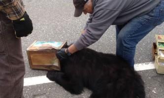 На аляски врятували ведмедя, який застряг головою в залізній банці