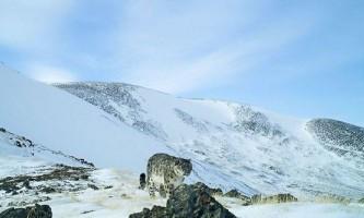 На алтаї вдалося зробити рідкісні знімки снігового барса