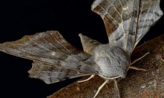 На аукціоні ebay продається право дати назву новому виду комах
