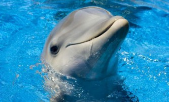 На багамах дельфін «врятував» втоплений iphone