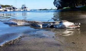На берег австралії вимило гігантського монстра