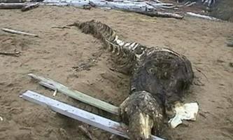 На далекому сході виявлено крокодила