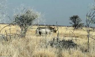 На джип з туристами в сафарі-парку напав носоріг