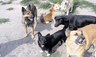 На гаїті з`явився собачий нічний патруль