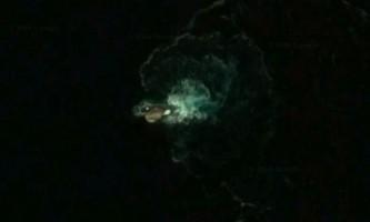 На google-картах побачили досі невідоме морське тварина