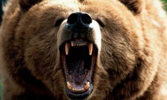 На ямалі ведмідь розірвав на шматки 20 оленів