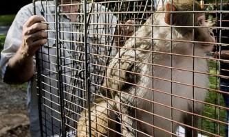 Мавпочка в кожусі відвідала канадську ikea